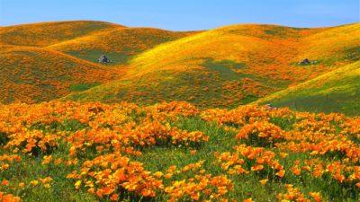 Imágenes De Fondo De Paisajes campo flores