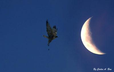 Imágenes De La Luna Menguante ave