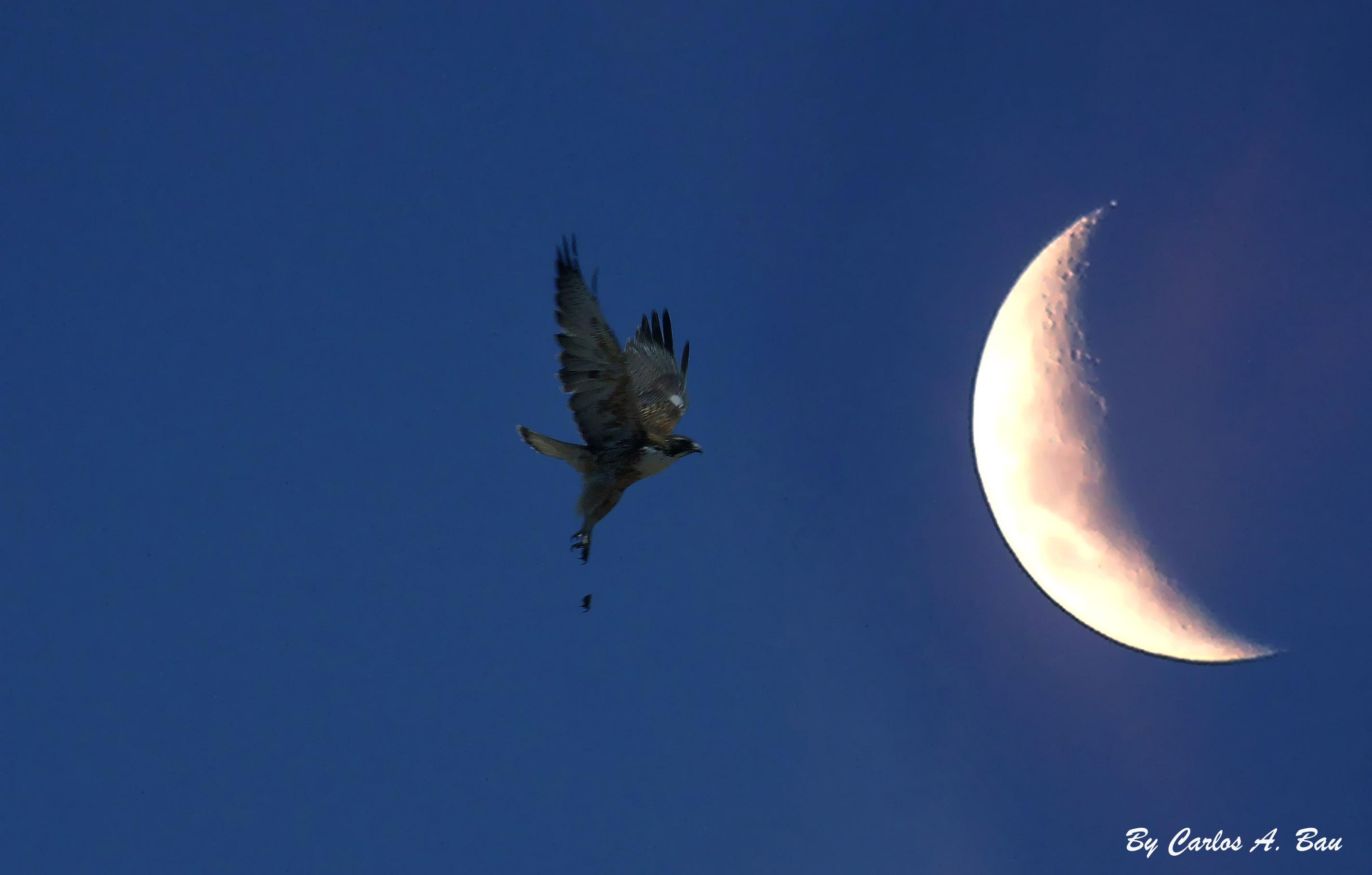 Imagenes De Las Fases Lunares
