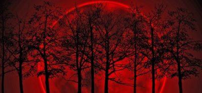 Imágenes De La Luna Sangrienta arboles
