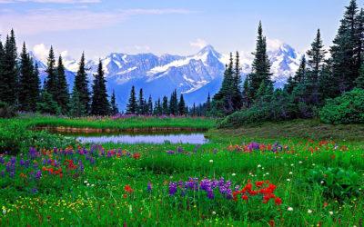 imagenes de paisajes lindos pradera