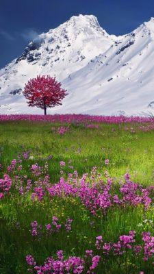imagenes de paisajes para celular pradera