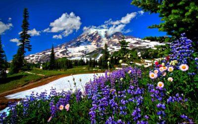 imagenes de paisajes preciosos flores