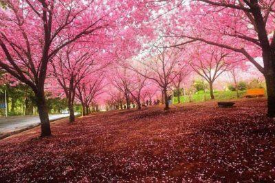 imagenes paisajes hermosos del mundo primavera