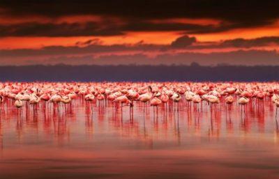 paisajes hermosos del mundo para fondo de pantalla flamingos