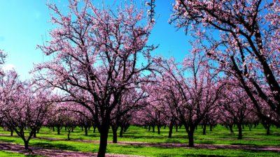paisajes hermosos del mundo para fondo de pantalla primavera