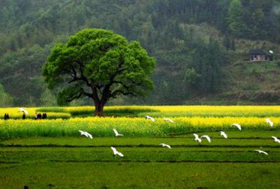 fotos bonitas de paisajes campo