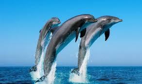 fotos de animales marinos domesticados
