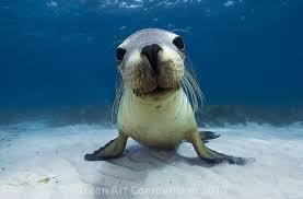 fotos de animales marinos obedientes