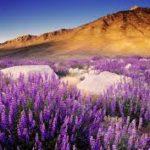 Imágenes De Flores Moradas Para Portada De Facebook