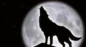 fotos de la luna llena  y lobos