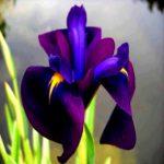 Imágenes De Flores Naturales Para Descargar Gratis