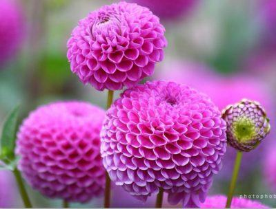 imagenes de flores naturales redonda