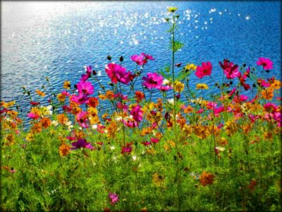 imagenes de flores naturales silvestres