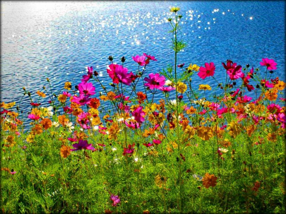 Flores Hermosas Flores Silvestres Fondos De Pantalla Gratis: Imagenes Flores Bellas