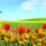 Imágenes De Flores Para Portada Para Descargar Gratis