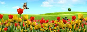 imagenes de flores para portada mariposa