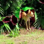 Imágenes De Plantas Carnívoras Reales De La Selva