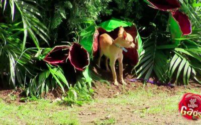 imagenes de plantas carnívoras  animales