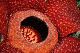 imagenes de plantas carnívoras naturales