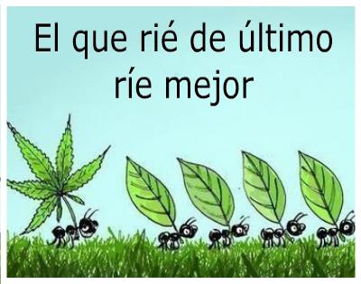 imagenes-de-marihuana-con-frases-chidas