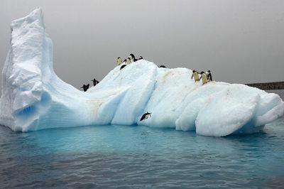 imagenes-de-paisajes-naturales-de-animales