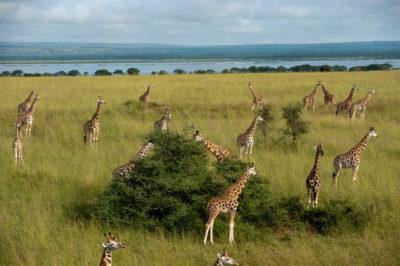 paisajes-bonitos-de-animales