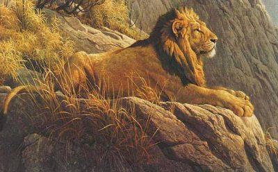 paisajes-hermosos-con-animales-salvajes