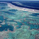 Principales Arrecifes De Coral En El Mundo Mar Del Coral