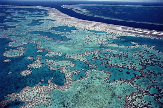 arrecifes-de-coral-en-el-mundo