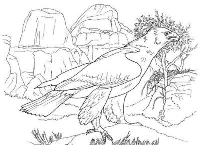 dibujos-de-animales-de-la-sierra-para-colorear