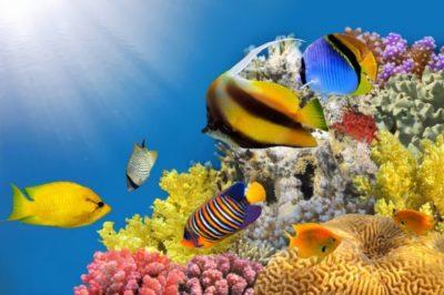 dibujos-de-arrecifes-coralinos