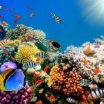 Imágenes De  Fondos De Pantalla De Arrecifes De Coral