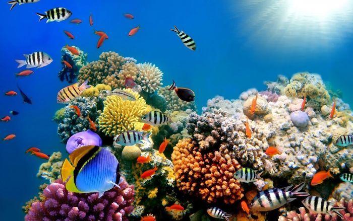 fondos-de-pantalla-de-arrecifes-de-coral