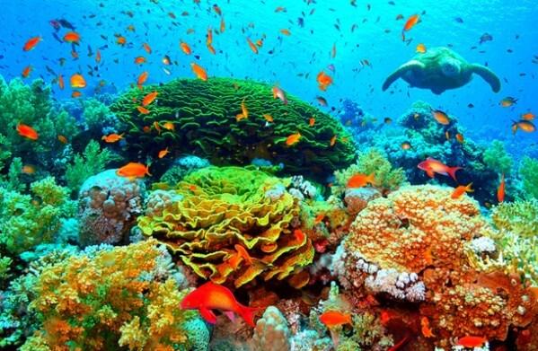 fotos-de-arrecifes-coralinos