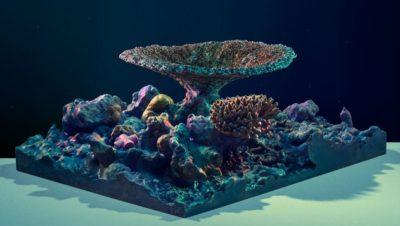 fotos-de-arrecifes-de-coral-artificiales
