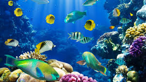 fotos-de-arrecifes-de-coral-gratis
