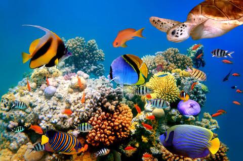 fotos-de-arrecifes-de-coral