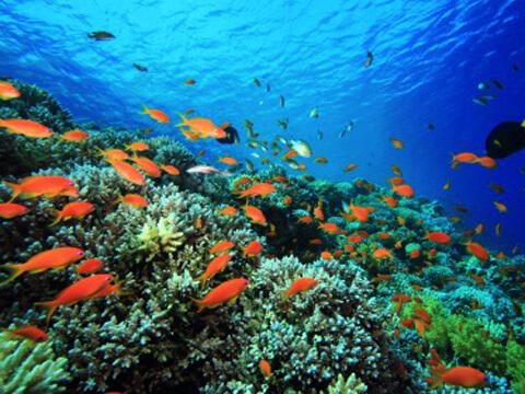 fotos-de-arrecifes-marinos