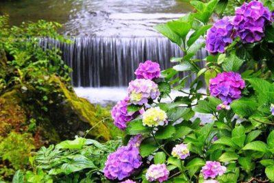 imagenes-de-cascadas-hermosas-con-flores