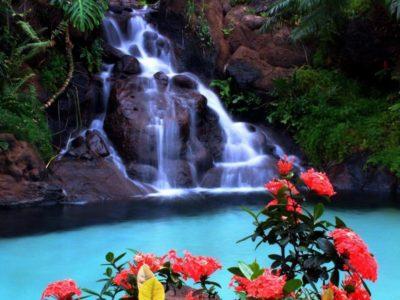 imagenes-de-cascadas-y-flores