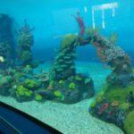 Arrecifes De Coral Artificiales Medio Ambiente Artificial