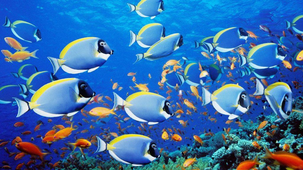 imagenes-arrecifes-coral-para-fondo-de-pantalla