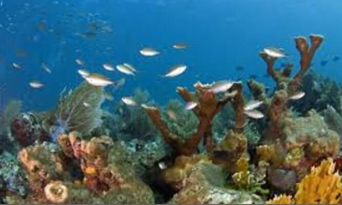 imagenes-flora-gran-barrera-de-coral-australiana