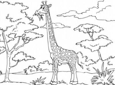 imagenes-de-paisajes-para-colorear-con-animales