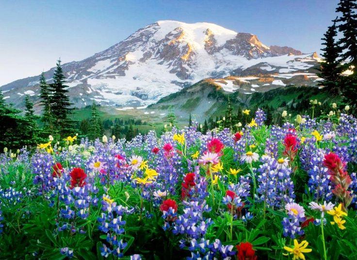 Fondos De Pantalla Hermosos De Flores: Fotos Paisajes Espectaculares Para Descargar Gratis