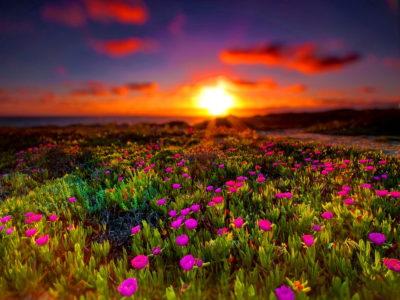 Imágenes De Amaneceres En El Campo flores
