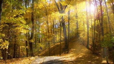 Imágenes De Fondo De Paisajes bosque