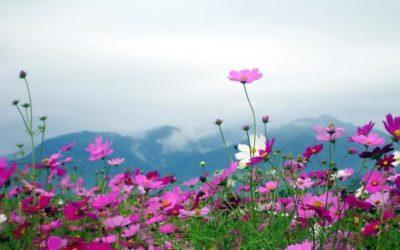 Imágenes De Paisajes Gratis flores
