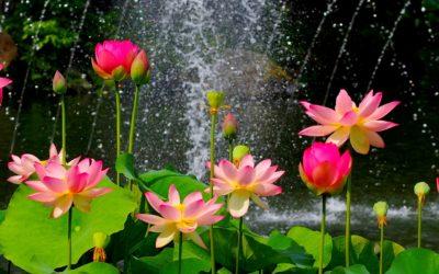 Imágenes De Paisajes Movibles flores